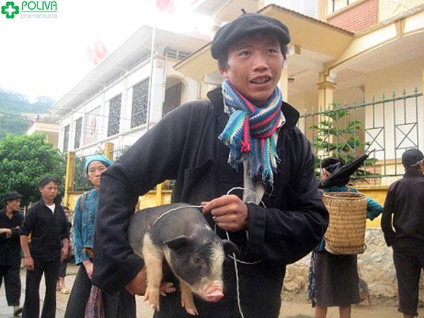Lợn bé nên người dân thường kẹp nách khi mang ra chợ bán