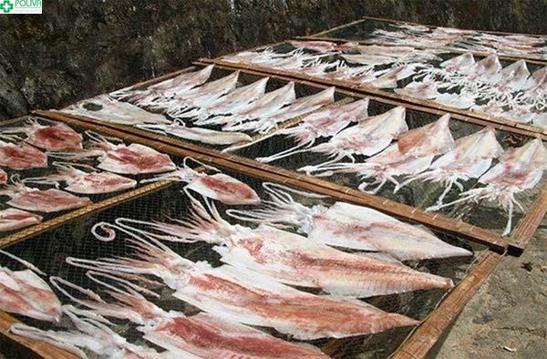 Mực một nắng được xem là đặc sản biển Cù Lao Chàm