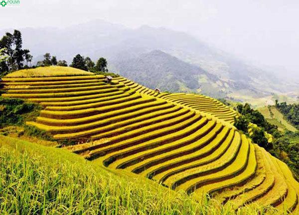 Sắc vàng long lanh bao trùm thung lũng Mường Hoa mỗi khi vào mùa lúa chín