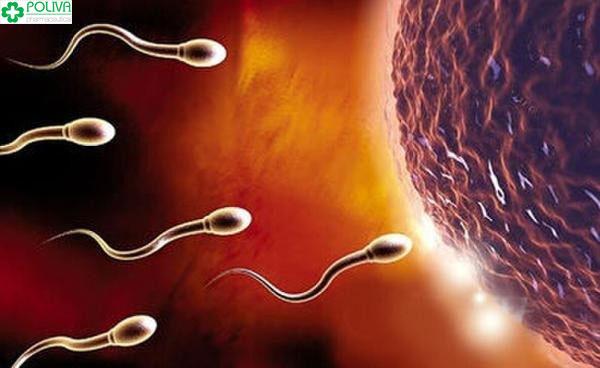 Tư thế tử cung trung gian giúp tinh trùng thuận lợi di chuyển gặp trứng
