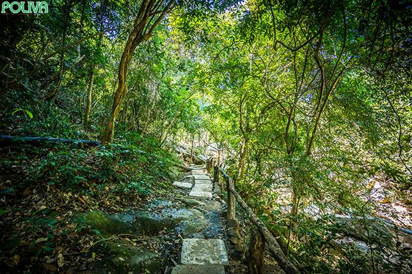 Con đường đi bộ xuyên qua rừng để tới với Suối Ba Hồ.
