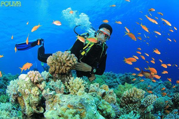 Lặn ngắm san hô là hoạt động giải trí hấp dẫn.