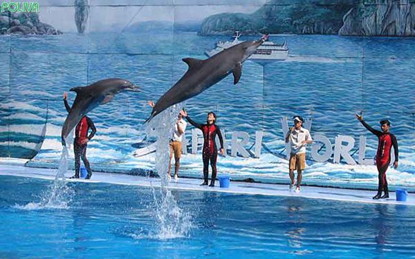 Xiếc cá heo du lịch Tuần Châu.