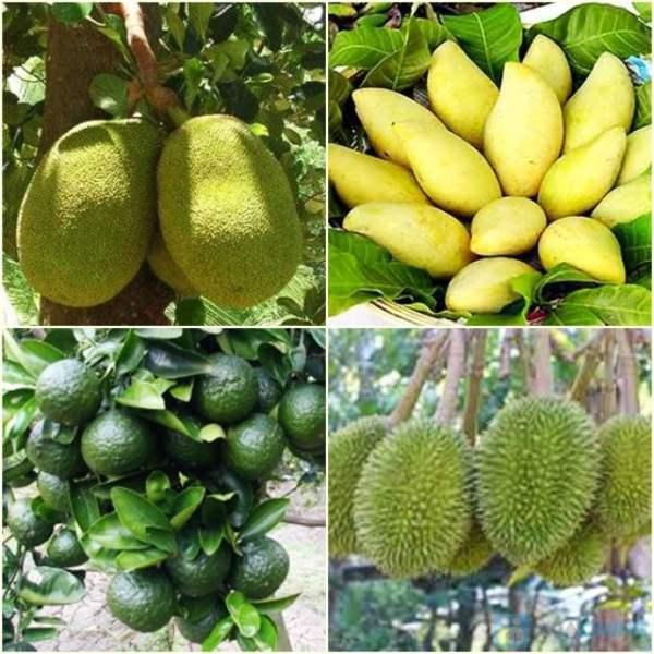 Có rất nhiều loại trái cây ngon