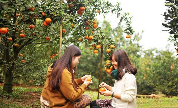 Du khách đến tham quan và thưởng thức trái cây chín tại miệt vườn