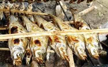 Say mê món cá nướng Ba Bể thơm lừng tại vùng cao Bắc Kạn