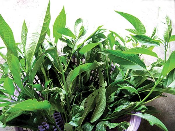 Canh tiết lá đắng - hương vị trứ danh nơi núi rừng Lai Châu