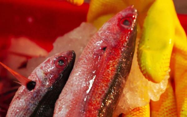 Cá đỏ là nguyên liệu chính cho món chả cá Nha Trang