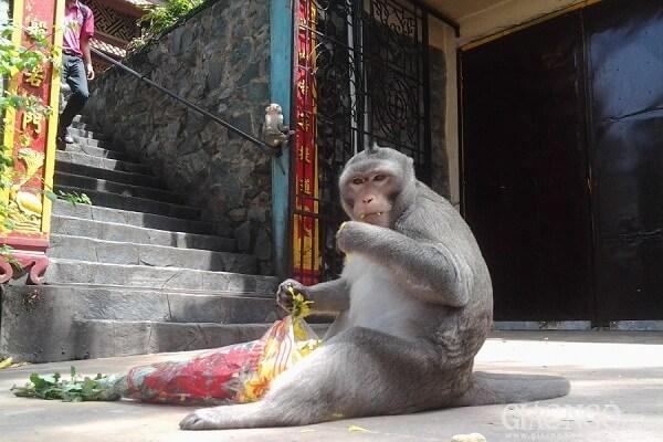Những chú khỉ tại đây rất đáng yêu và hiền lành với du khách