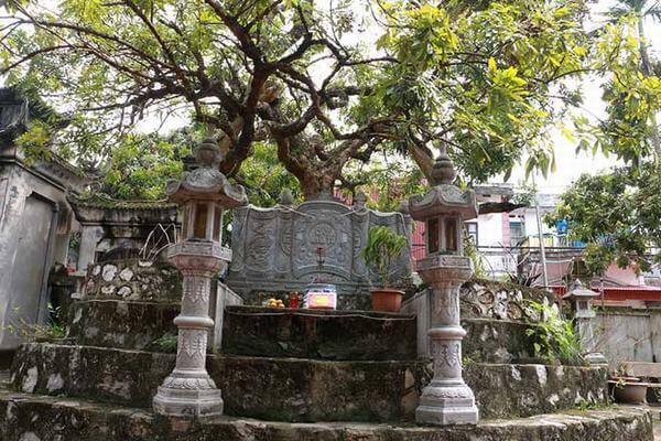 Cây nhãn tổ đầu tiên ở Việt Nam