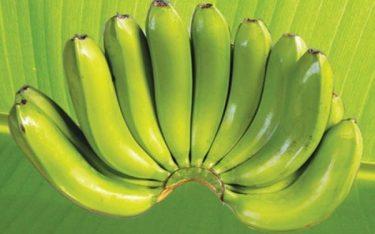 Chuối Laba Đà Lạt – Cực phẩm tiến vua cao quý một thời