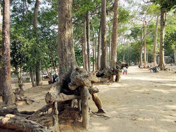Rễ cây trồi lên mặt đất tạo thành những hình thù độc đáo, khác biệt.