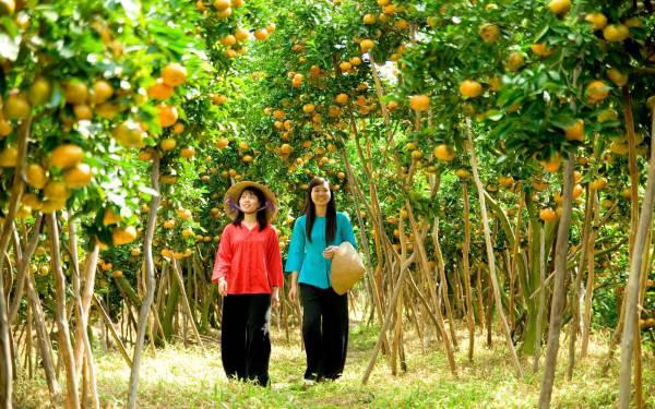 Cù lao Tân Quy – Bức tranh miệt vườn màu sắc tô điểm cho Trà Vinh