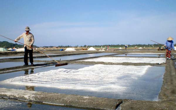 Sản lượng muối Sa Huỳnh