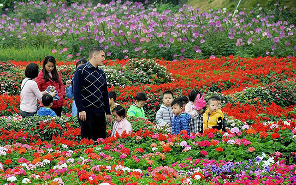 Thung lũng hoa rực rỡ sắc màu