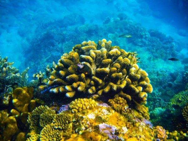 Ngắm san hô dưới biển là một thú vui hấp dẫn với khách du lịch