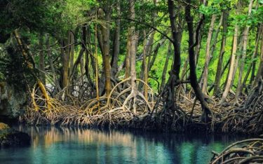 Khu du lịch sinh thái Rừng Đước đẹp như thước phim nghệ thuật