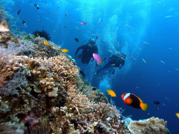 Lặn ngắm san hô- hoạt động thú vị khi đến Hòn Móng Tay