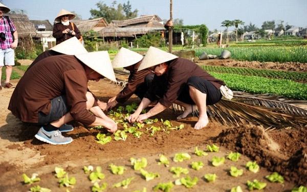 Một ngày làm nông dân làng rau Trà Quế