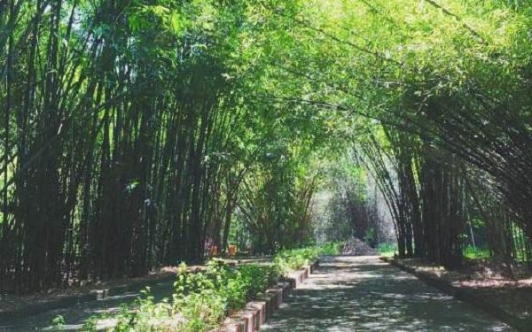 Kinh nghiệm cần bỏ túi khi đi du lịch làng tre Phú An