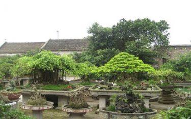 Trải nghiệm cuộc sống vườn tược thú vị tại làng vườn Bách Thuận