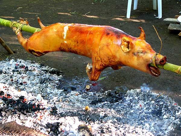 lợn sữa quay