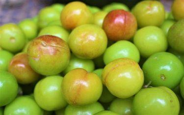 Mận cơm xứ Lạng: Tinh hoa quả Việt, thưởng thức là mê