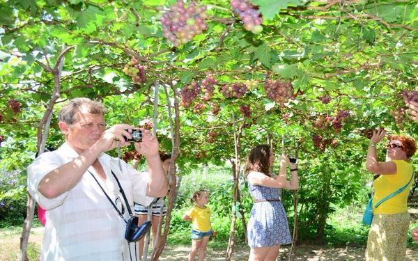 Nhiều du khách nước ngoài ghé tham quan vườn nho