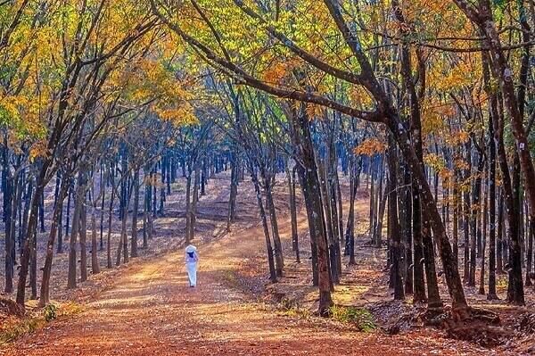 Bước trên con đường lá vàng rụng dày là một trải nghiệm rất tuyệt vời
