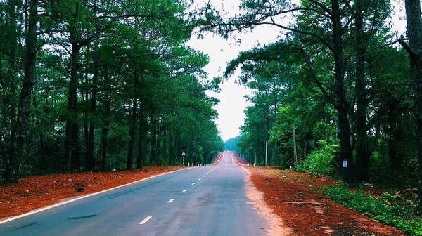 Những con đường với hai bên là rừng thông xanh mát