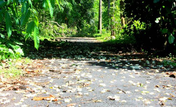 Con đường nhựa dẫn vào thác thơ mộng vơi những cánh hoa rừng