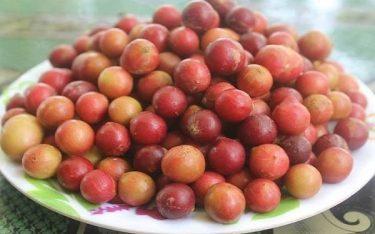 Trái Da Đá – Đặc sản chỉ riêng vùng Ninh Thuận mới có