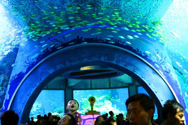 """""""Thủy cung thu nhỏ' tại viện hải dương học Nha Trang"""