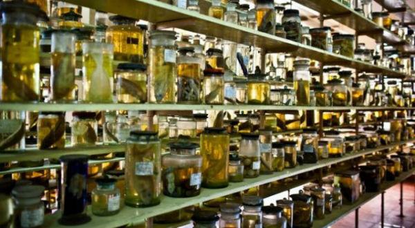 Những mẫu vật được sắp xếp khoa học trên giá ở viện hải dương học