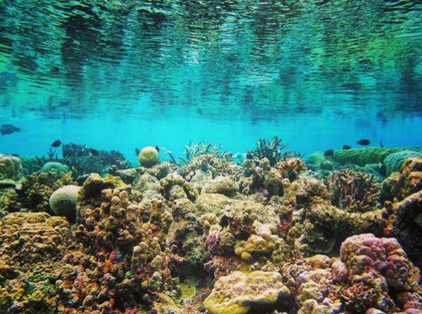 """Lặn biển và ngắm những rạn san hô """"xinh đẹp"""""""