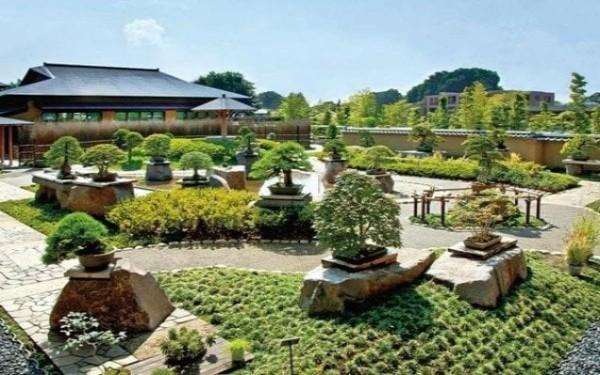 Du lịch miền tây sông nước ngắm vườn bonsai đẹp độc đáo
