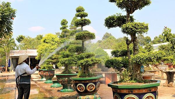 Người dân phải chăm sóc cẩn thận để tạo nên khu vườn đẹp, ưng mắt du khách