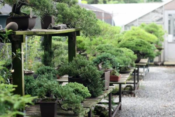 Vườn bonsai đẹp ở Vĩnh Long