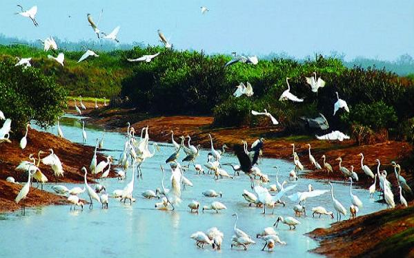 Ghé thăm vườn quốc gia Xuân Thủy – Viên ngọc quý của đất trời