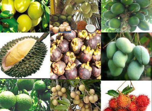 Đa dạng các loại trái cây tại làng du lịch