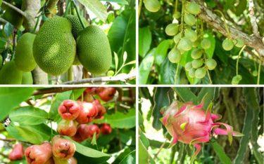 Ghé thăm miệt vườn Cái Bè – Vựa trái cây lớn nhất Tiền Giang