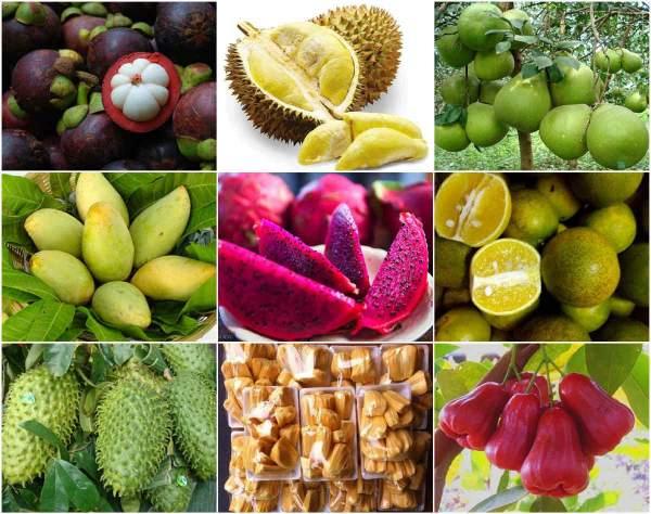 Các loại trái cây đủ sắc màu tại miệt vườn Cái Bè