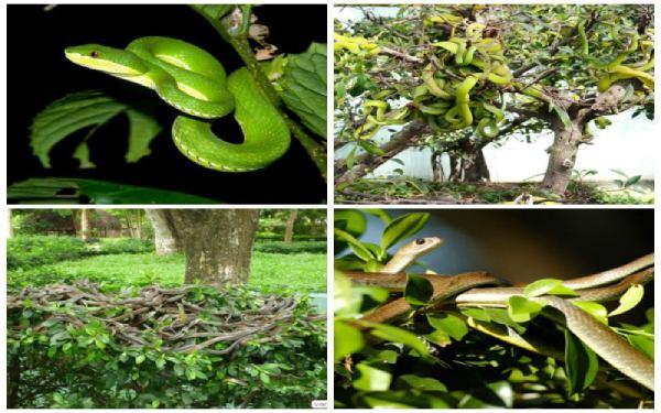 Đa dạng các loại rắn về chủng loại màu sắc