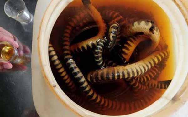 Đẻn biển: Thức đặc sản hương vị lạ hút khách ở Quảng Bình