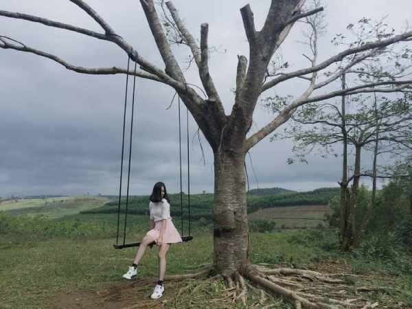 """Những bức hình xinh xắn ngay tại ông cây """"huyền thoại"""""""