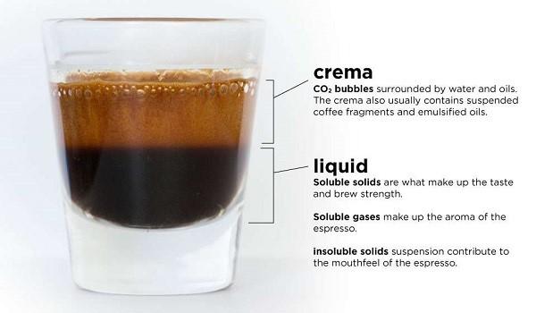 Espresso có hai lớp cơ bản là Crema và Liquid