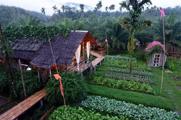 Xây dựng vườn rau organic đã được nhiều resort phát triển