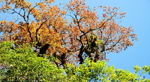 Thảm thực vật dãy Tả Liên