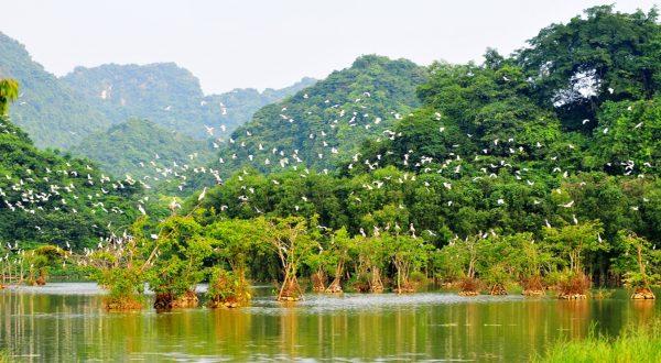 Quang cảnh Thung Chim