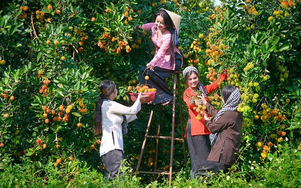 Review vườn trái cây 9 hồng – Điểm đến lý tưởng cho du khách